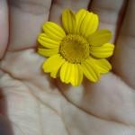 Cuidando-la-flor-150x150.jpg