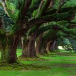 arboles-y-mucho-verde-150x150.jpg
