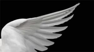bajo-el-ala-de-un-angel-300x168.jpg
