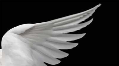 bajo-el-ala-de-un-angel.jpg