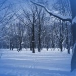 crudo-invierno-150x150.jpg