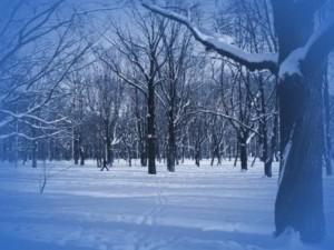 crudo-invierno-300x225.jpg