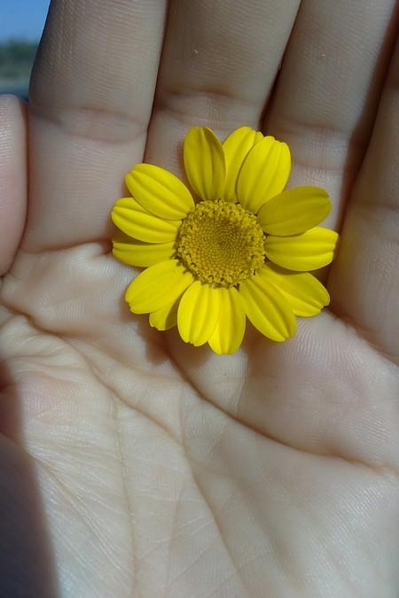 cuidando-la-flor.jpg