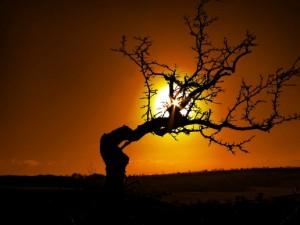 dying-tree-300x225.jpg