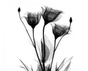 flores-negras-300x240.jpg