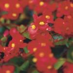 flores-rojas-150x150.jpg