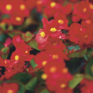 flores-rojas.jpg