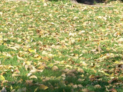 hojas-que-caen-nuska.jpg
