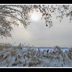 jardin-de-invierno-150x150.jpg
