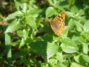 mariposa-al-sol.jpg