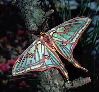 mariposa1.jpg