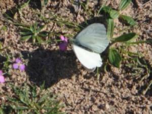 mariposa2-300x225.jpg