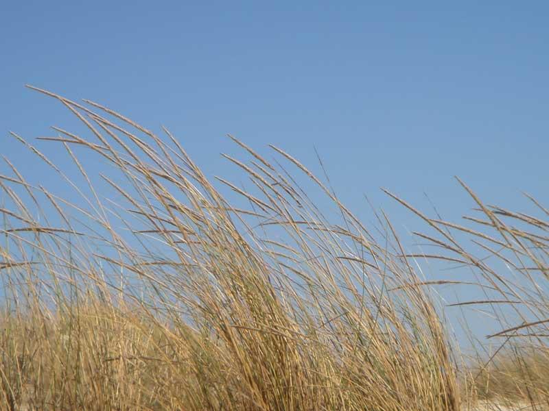 mecidas_por_el_viento.jpg