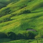 mucho-verde-150x150.jpg