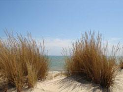 playa_de_los_palos.jpg