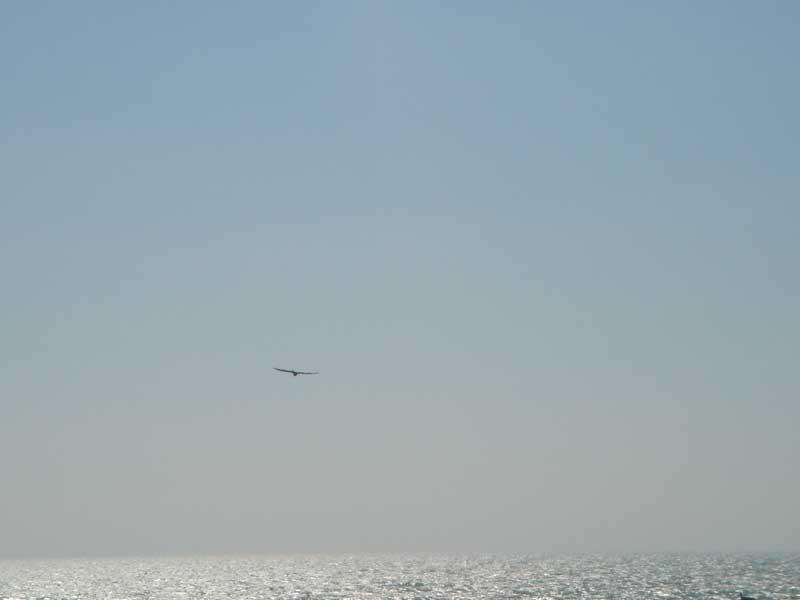 sobrevolando_el_mar.jpg