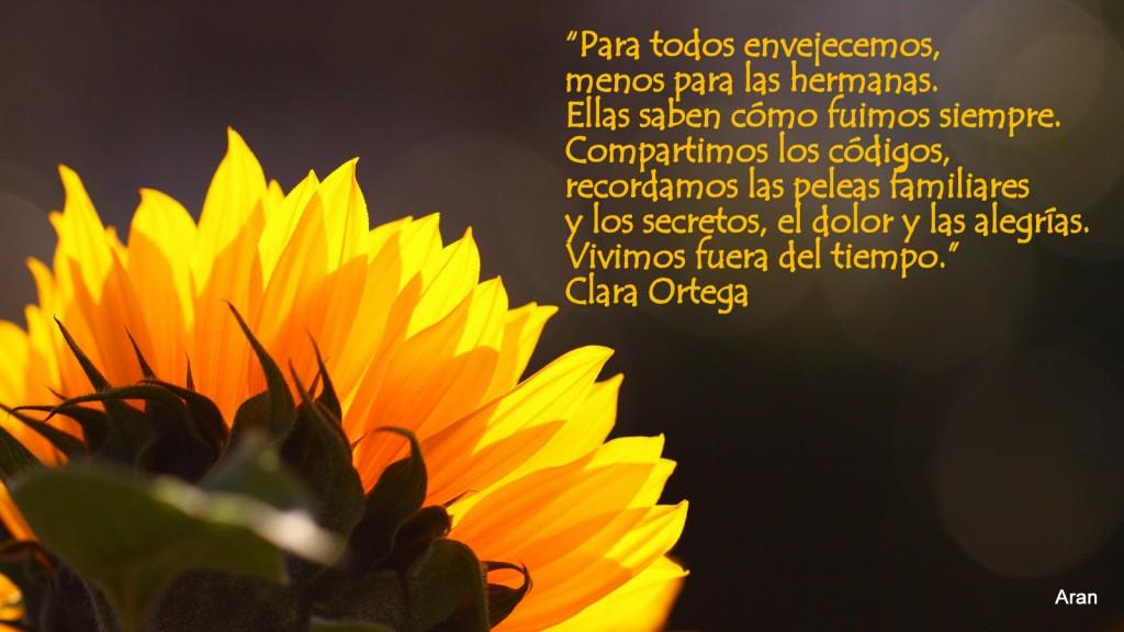 sunflower-1920x10801-1024x576.jpg