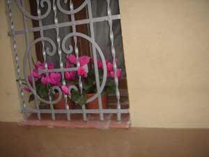 ventana-con-flores.jpg