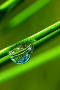 verde1-200x300.jpg